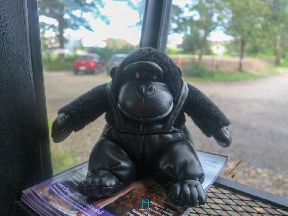Gorilla in the Garden คาเฟ่ลิงกอริลล่าลึกลับในป่ากลางเมือง นครศรีดีย์