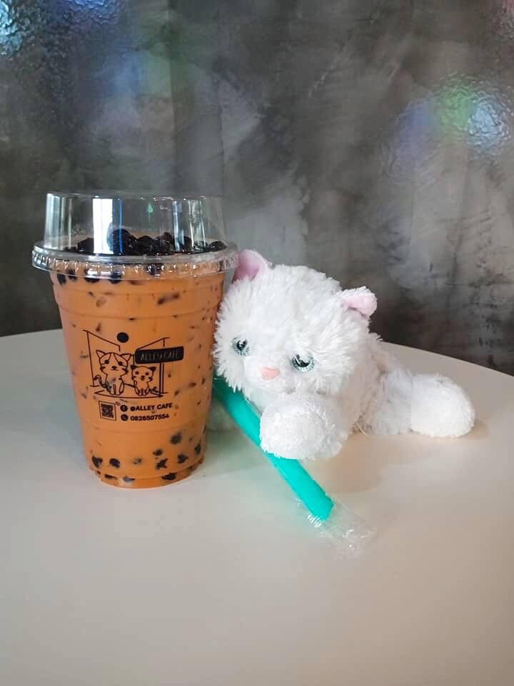 Alley Cafe คาเฟ่น่ารักๆสไตล์แมวๆ at ท่าศาลา ร้านนั่งชิวๆสบายๆ นครศรีดีย์