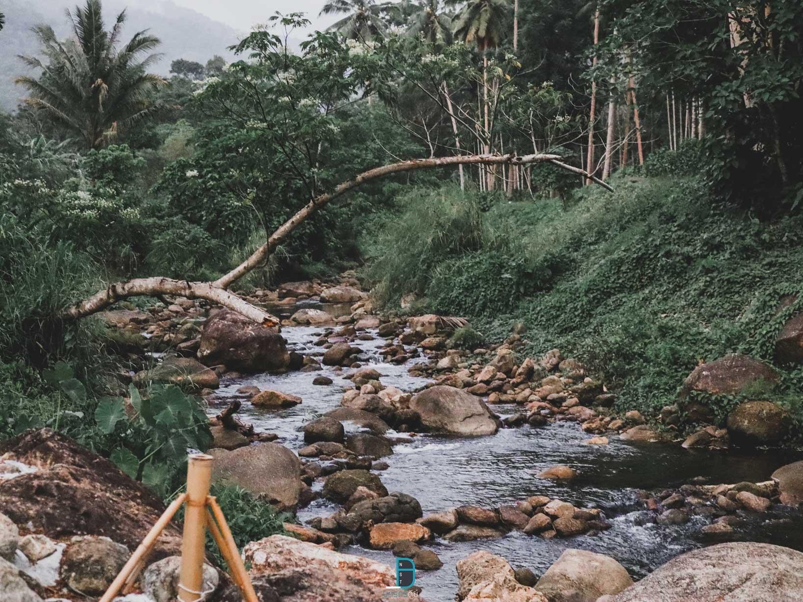 รีสอร์ทใหม่ริมลำธาร ช้างกลาง Chanya forest หมูกะทะวิวหลักล้าน กลางหุบเขา นครศรีธรรมราช นครศรีดีย์