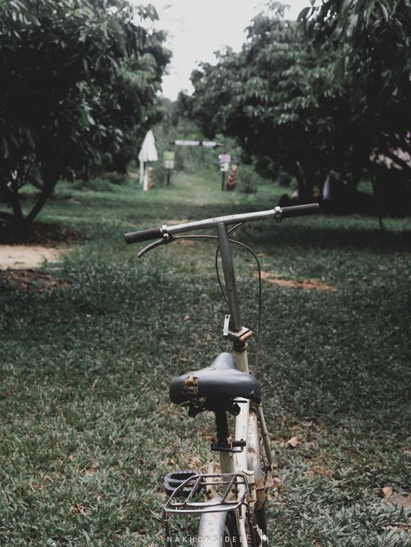 ขี่จักรยานไปลุยสวนมัลเบอร์รี่กันนนพัทลุง,tat,ททท,การท่องเที่ยว,นครศรี,จุดเช็คอิน,กงหรา,พื้นบ้าน