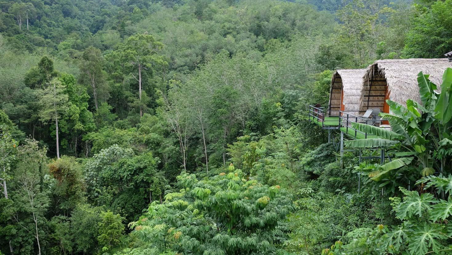9.-ควนนกเต้น--ที่พัก- มีที่พักให้เลือกหลายแบบหลายสไตล์-ทั้งขนำ-บ้านไม้ไผ่-หรือแบบเต๊นท์ก็มีนะครับ-ทั้งหมด-วิวหลักล้าน-ทะเลหมอก-100--กันเลยทีเดียว ที่เที่ยว,ที่พัก,พัทลุง,การท่องเที่ยว,ประเทศไทย,วิถีชีวิต,ชุมชน,ดริฟท์กาแฟ
