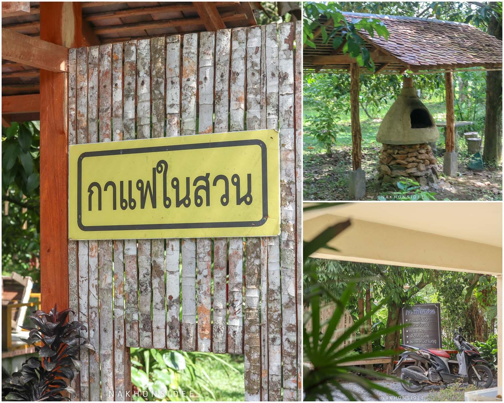 5.-กาแฟในสวน-บ้านพน-พัทลุง-บอกเลยที่นี่บรรยากาศ-ฟิลลิ่ง-10/10-คอนเซปคือกาแฟแบบบ้านญาติ-สามารถสั่งกาแฟแล้วเดินชิวในสวน--พื้นที่กว้างมาก--ภายในมีผลไม้หลายชนิดสามารถเก็บกินได้ฟรีจากต้นเลย-และสามารถนำเต๊นท์มาจัด-camping-ได้ด้วยนะครับ-ดีย์จริง กาแฟในสวน-บ้านพน ที่เที่ยว,ที่พัก,พัทลุง,การท่องเที่ยว,ประเทศไทย,วิถีชีวิต,ชุมชน,ดริฟท์กาแฟ