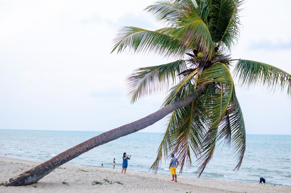 ในส่วนของต้นมะพร้าวต้นนี้คนขึ้นไปถ่ายกันเยอะเลยครับ คาเฟ่,ริมทะเล,สิชล,นครศรี,มาดูเลย์,MADoเลย์,ใกล้วัดเจดีย์,ตาไข่