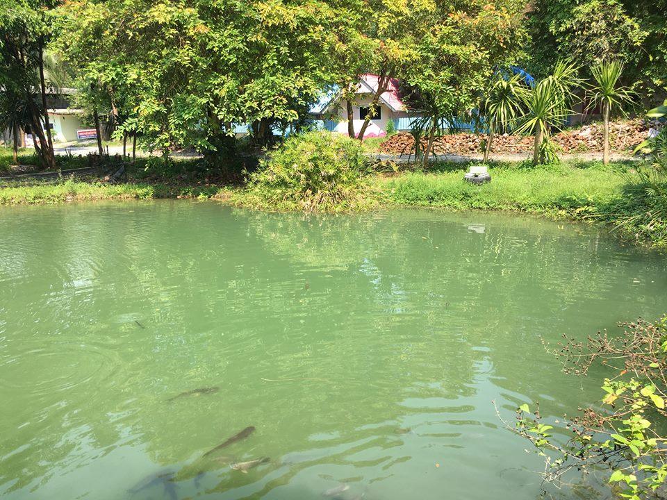 สวนอาหารรักษ์ไทย ท่าศาลา นครศรีธรรมราช นครศรีดีย์